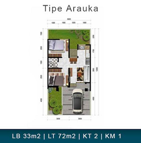 Arauka